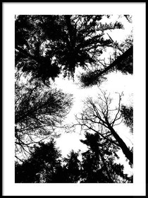 Poster Trädkronor i silhouette