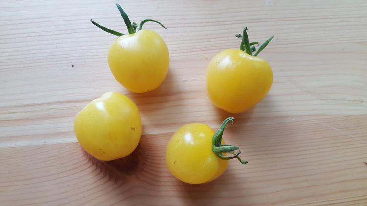 Snowberry, körsbärstomat