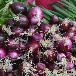 Purplette, syltlök