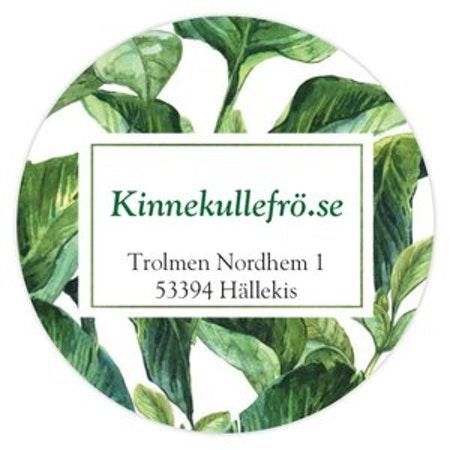 Finnmarkens vita kålrot