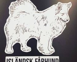 Isländsk fårhund siluett