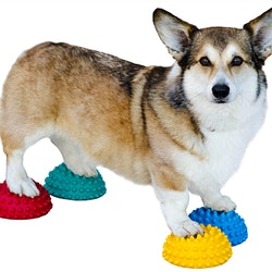FitPaws PawPods 4-pack