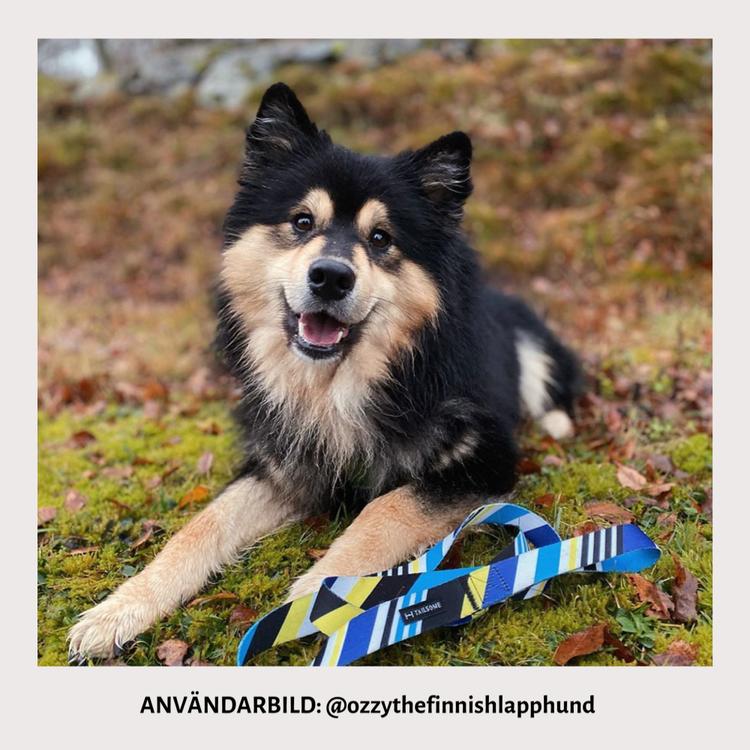 Hundhalsband och koppel med ränder