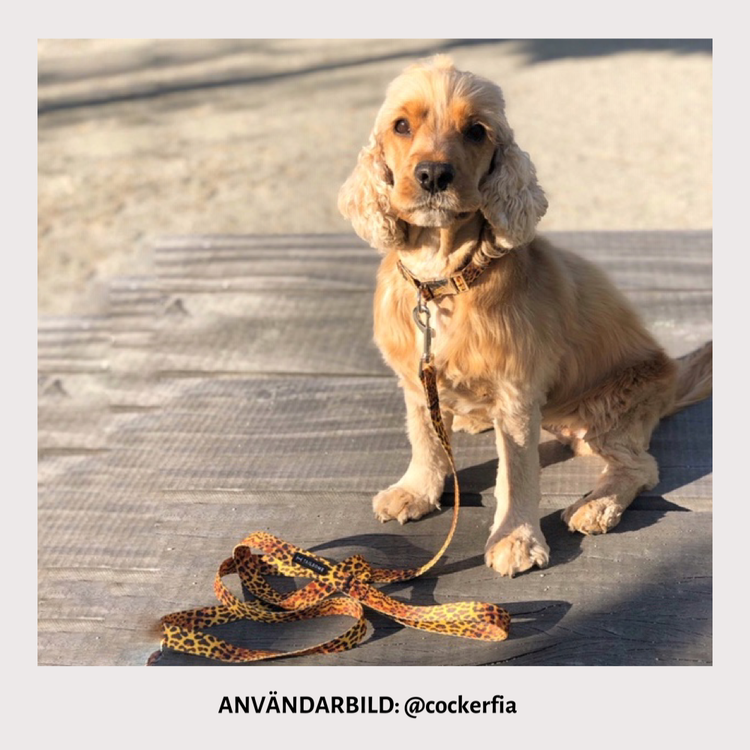 Hundhalsband och koppel med leopardmönster