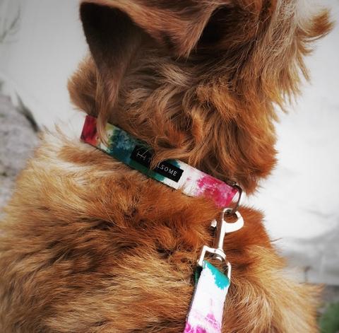Hundhalsband med färgglatt mönster