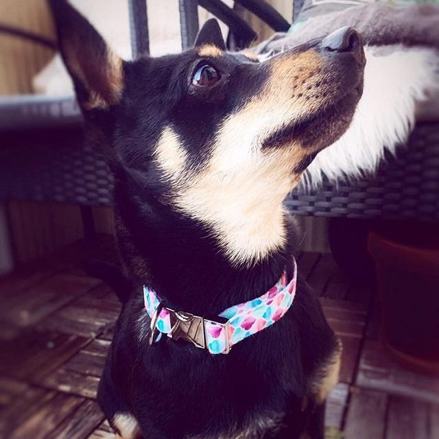 Hundhalsband med pastellmönster