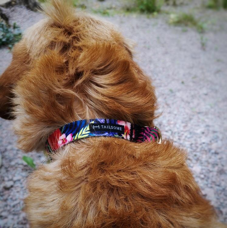 Hundhalsband med blommigt mönster