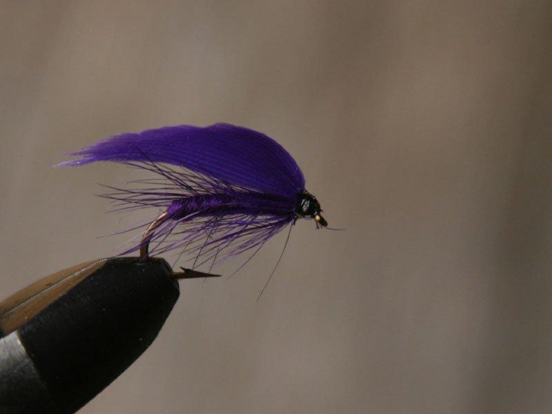 Deep Purple (torr och våt)