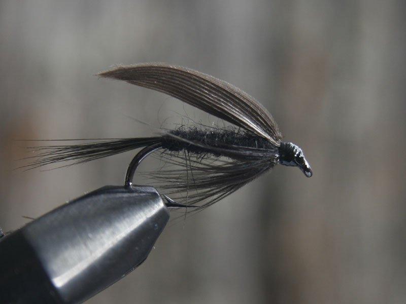 Black gnat (torr och våt)