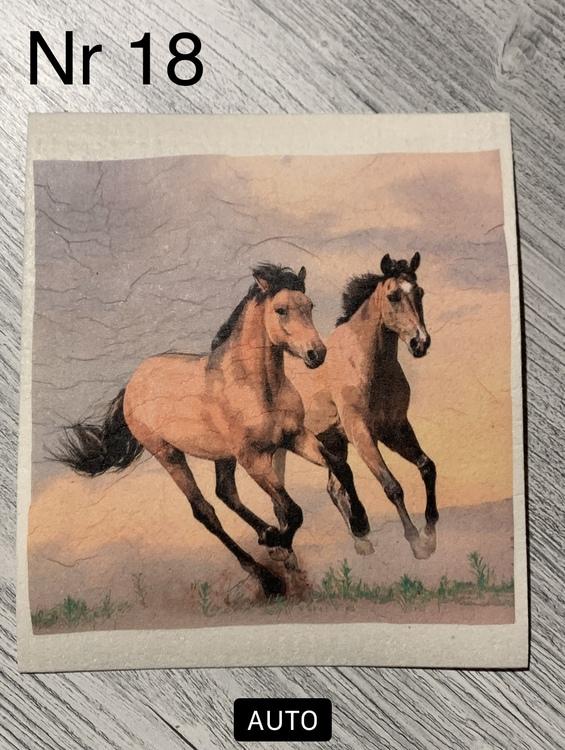 Disktrasa hästar springer