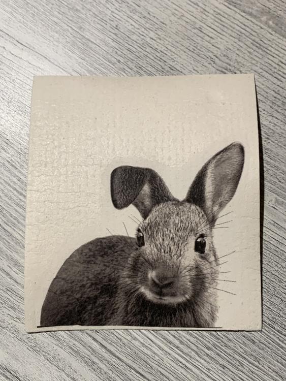 Disktrasa kanin