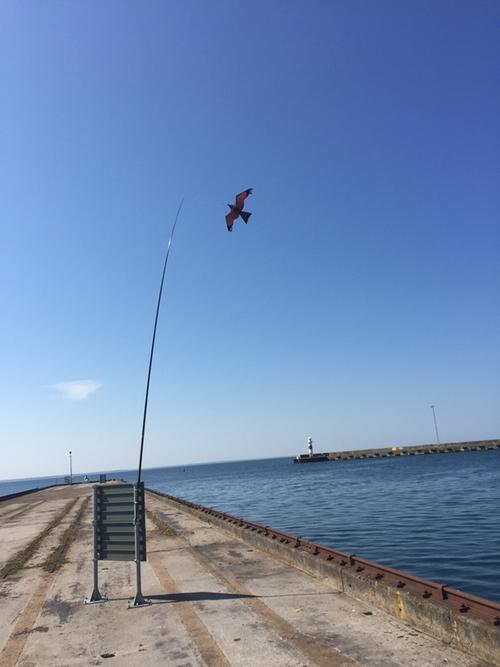 1 st 5 meter Fågelskrämma Komplett med 1 boll.