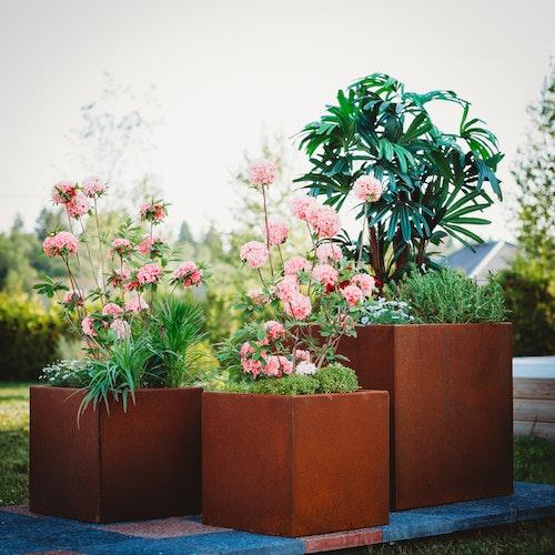 Cortenstål Clara Set- blomkrukor