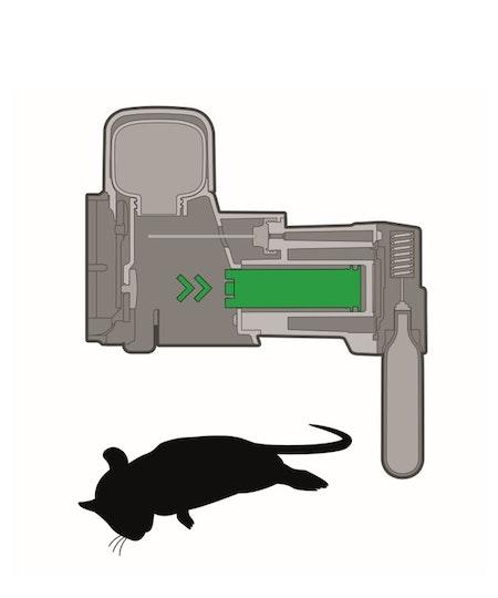 Goodnature a24 proffsfälla mot mus / rått