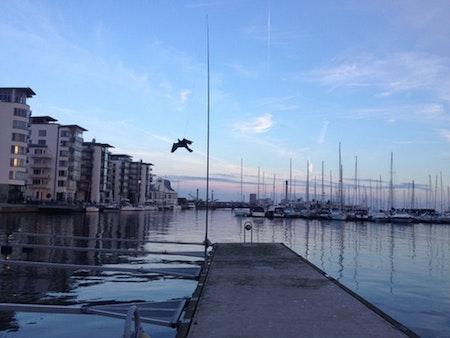 Fågelskrämma med drake 1 st 7 meter med 1 st boll.