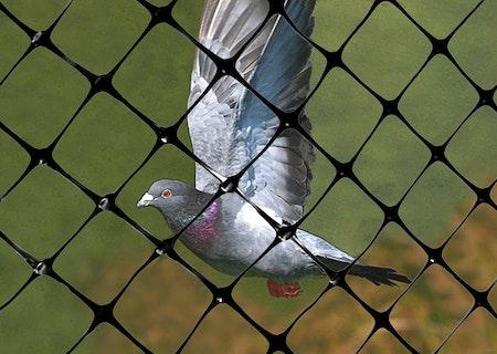 Rikstäckande hjälp mot fåglar, skadedjur. Offert