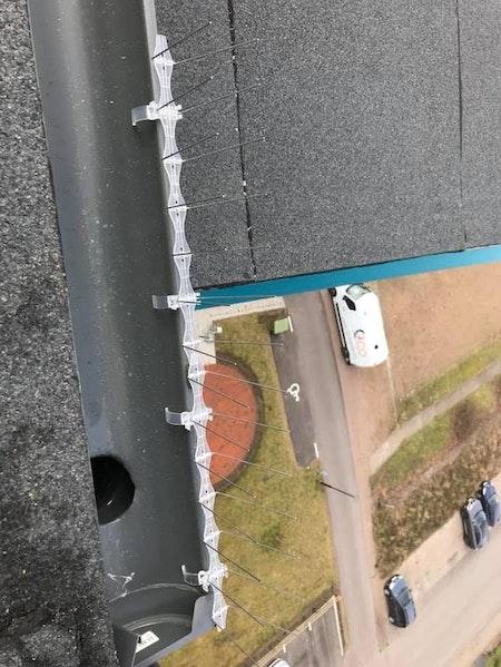 fågelpiggar 10 meter P14