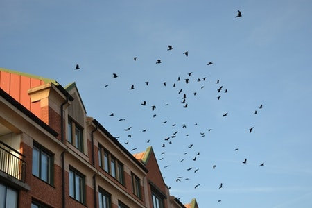 Fågelskrämma 10 st med drake 5 m.Fraktfritt