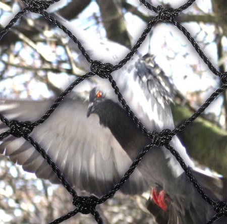 Fågelnät och kattnät 50 mm 30 x 30 m.