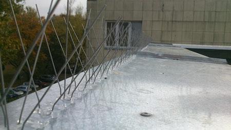 Fågelpiggar, fågelspik 100 meter  v-typ. Storpack