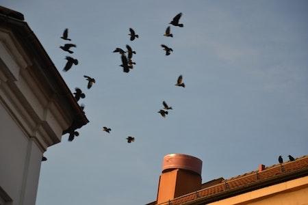 Fågelskrämmor 5 st med drake 5 m. LAGERTÖMNING