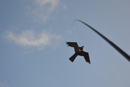 2 pack 5 m Fågelskrämma Komplett med 4 drakar.