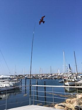 Fågelskrämma Komplett med drake 7 m med 1 st boll