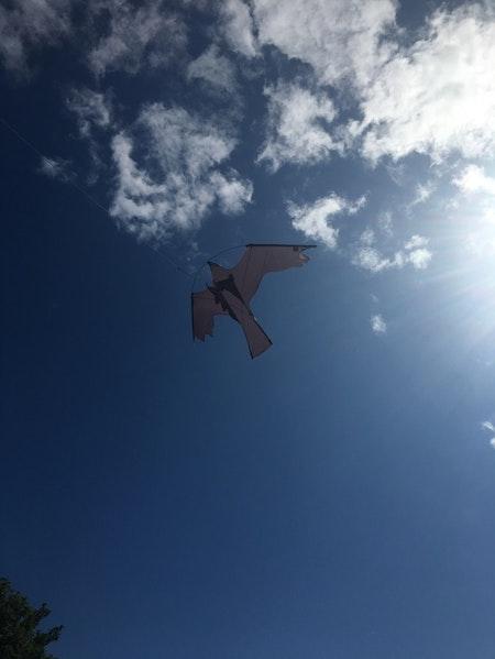6 meters Fågelskrämma Komplett med 2 drakar, Fraktfri
