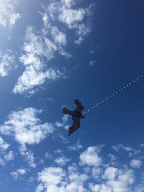 Kanon Fågelskrämma Komplett med drake 7 meter - fågelskrämma.se WE-25