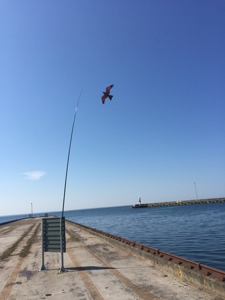 Fågelskrämma 7 meter med 2 Drakar.