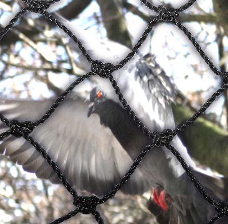 Fågelnät, kattnät 50 mm 10 x 10 m.