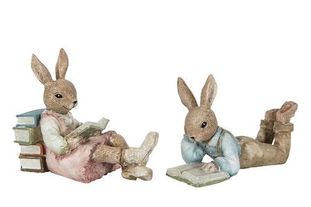 Kanin pojke som läser