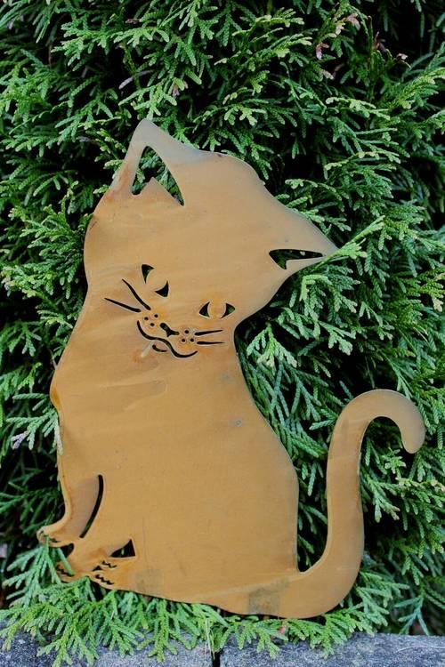 Katt Tussie sittande