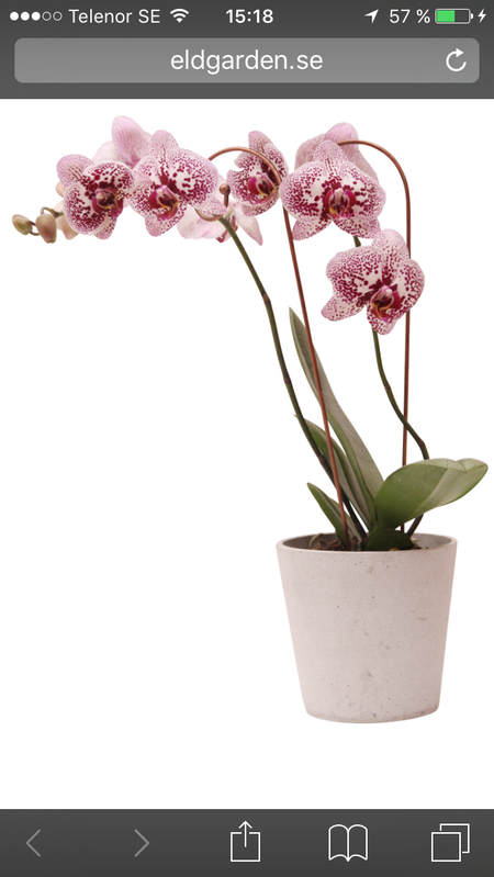 Orkidé stöd