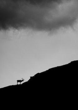The Lonely Reindeer Trätavla