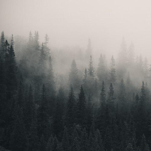 Fading Mist SQ Canvas
