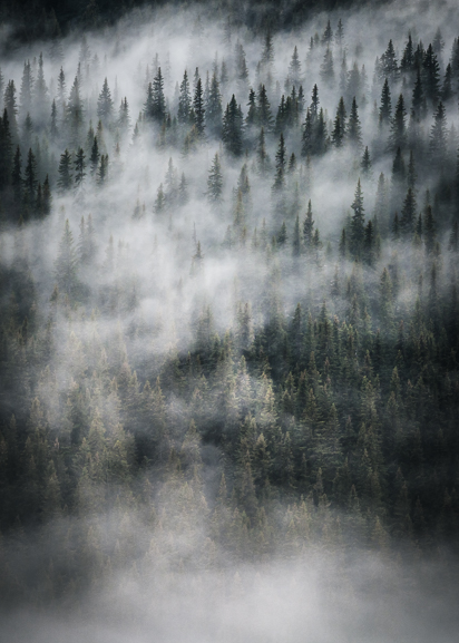 Fay Forest (Vertical) Poster