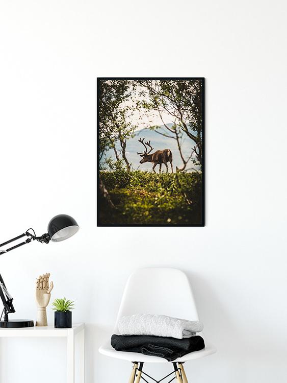 Ren i skogsglänta Poster