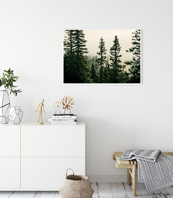 Picea Abies Poster