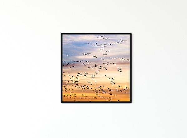 Birds SQ Poster