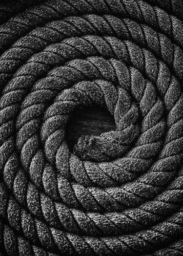 Snake Coiled Poster