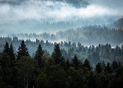 Dimmig Skog Poster
