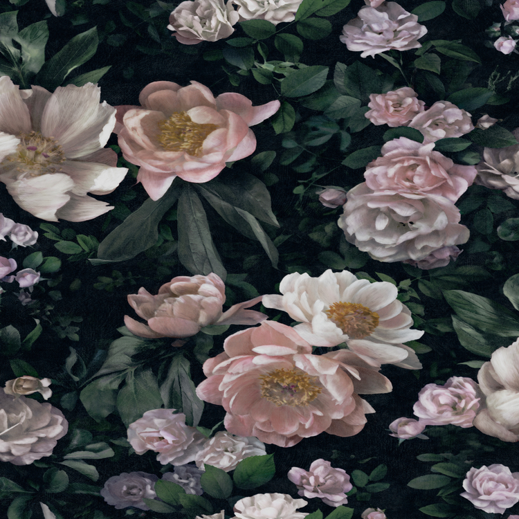 New Dawn Rose 7234