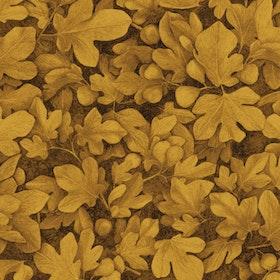 Ficus Gold