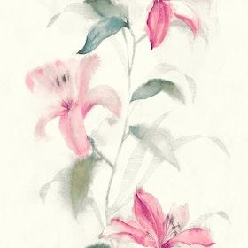 Jasmine, 31601