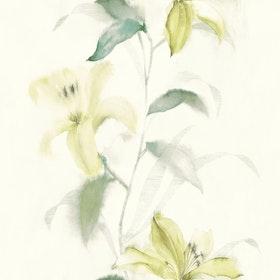 Jasmine, 31604