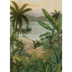 Tropical Morning, 22780