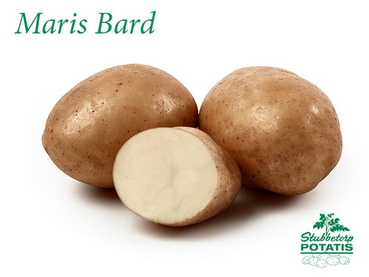 Maris Bard