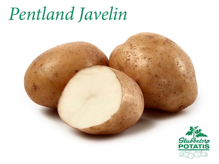 Pentland Javelin - Kullens Favorit