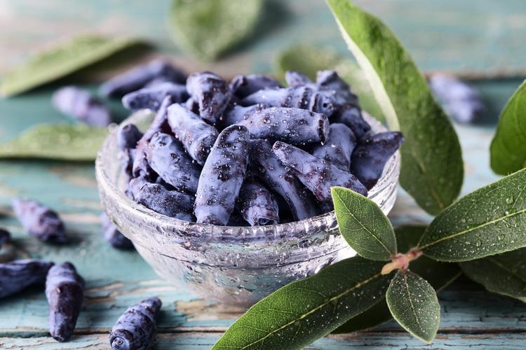 Blåbärstry - Myberry Sweet